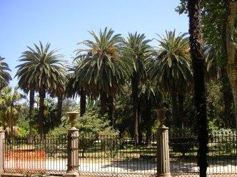 Palmiers de Palerme