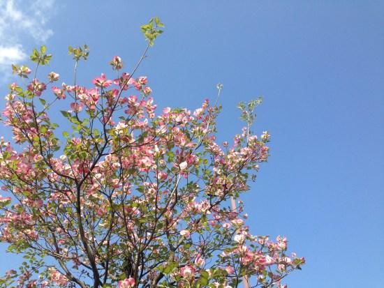 レイクタウンの花