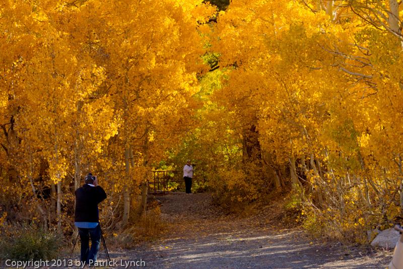 PL20131011-Fall-Colors-1063_4_5