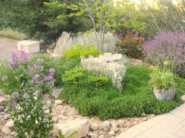 See how teucrium does?