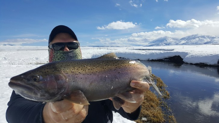 Upper Owens River Fly Fishing large Rainbow Trout