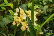 Лоро-парк: двухцветная орхидея