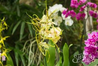 Лоро-парк: желтая орхидея
