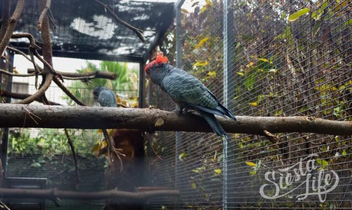 Лоро-парк: попугай в клетке