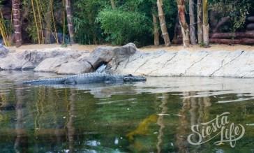 Лоро-парк: крокодил в пруду