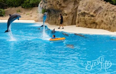 Лоро-парк: дельфины катают ребенка в лодке