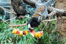 маленькие обезьянки в Лоро-парке