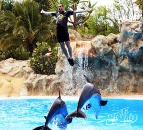 шоу дельфинов в Лоро-парке с выпрыгиванием дрессировщика из воды