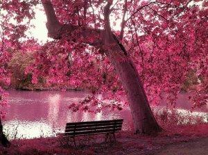 rosado color romantico
