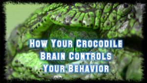 how your reptilian brain controls your behavior