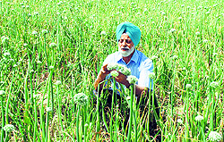 National award recipient Mohinder Grewal spends time in his fields.