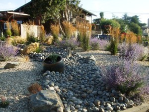 AA Drought Resistant Plants