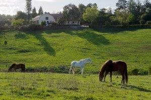 PA Hills Horses