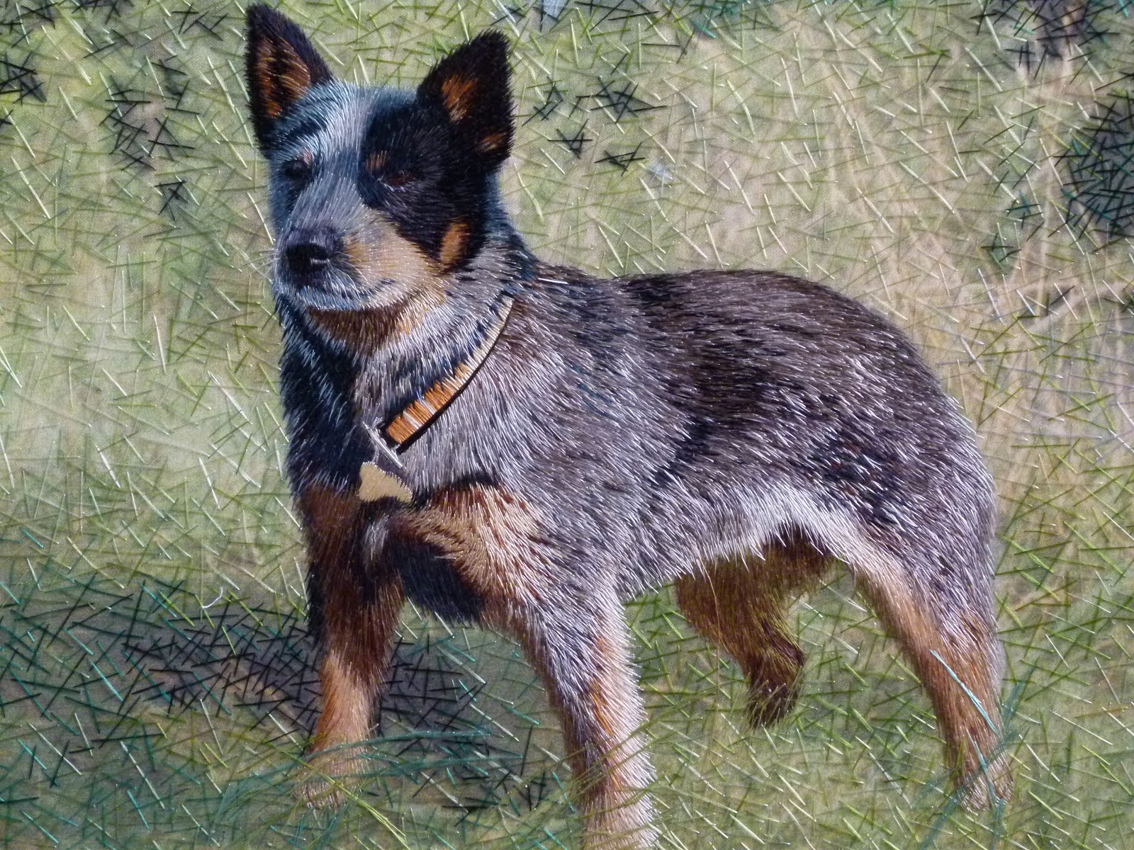 Australian Cattle Dog Australian Cattle Dog