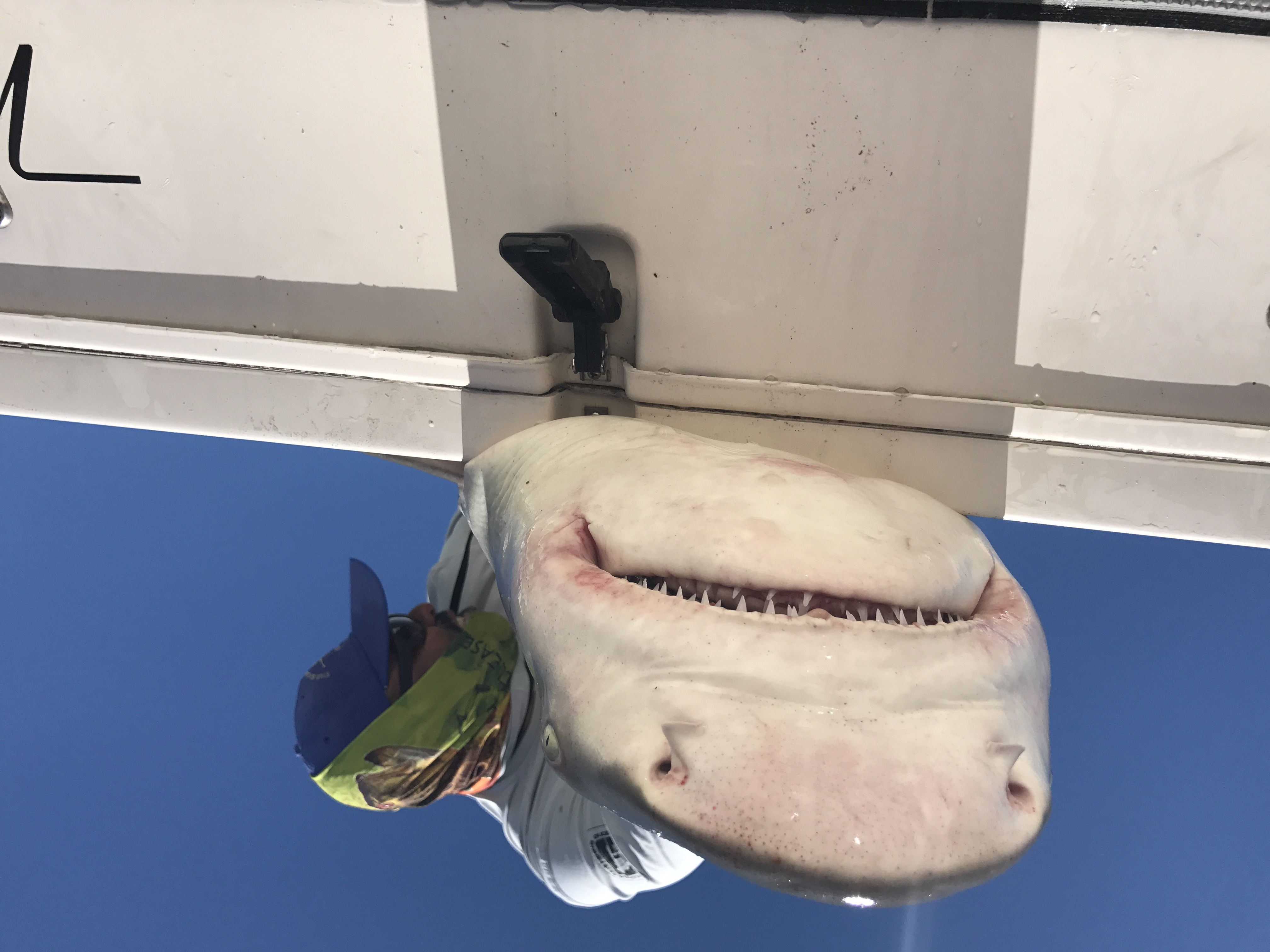Miami shark fishing
