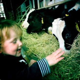 Roo stroking a calf nose