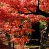 絶景ブームの仕掛け人 詩歩さんの「死ぬまでに生きたい!世界の絶景 日本編」が累計47万部の大ヒット