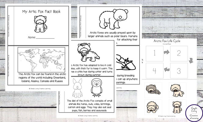 Arctic Fox Life Cycle Printable Pack - Simple Living Creative Learning