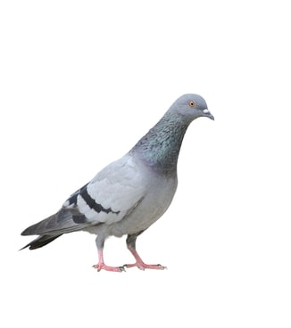 pigeon holed Not Doing THIS Could Very Well Be The Biggest Mistake You Make In Your Software Development Career