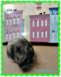 hamster in the city