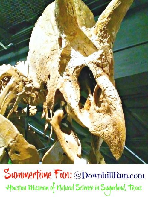 Natural Science Museum SugarLand TX 1