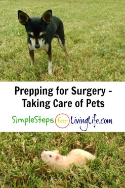taking-care-of-pets