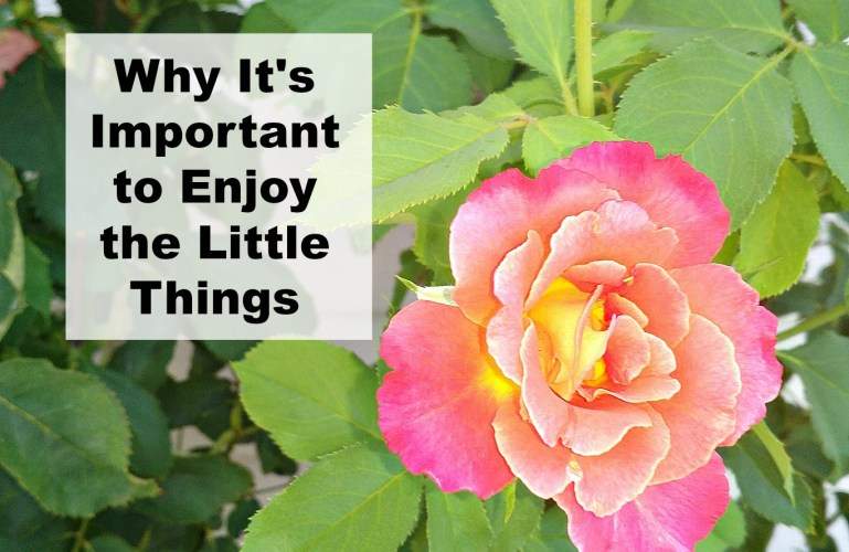 Why It's Important to Enjoy the Little Things