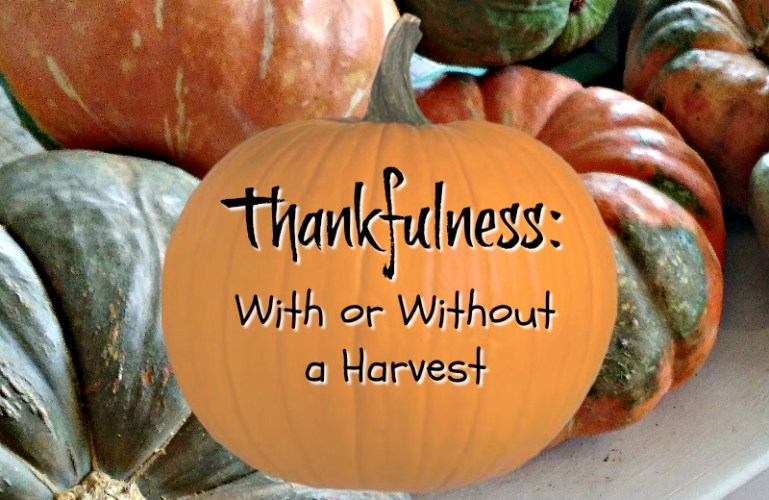 Thankfulness:  With and Without a Harvest