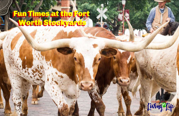 stockyards featured