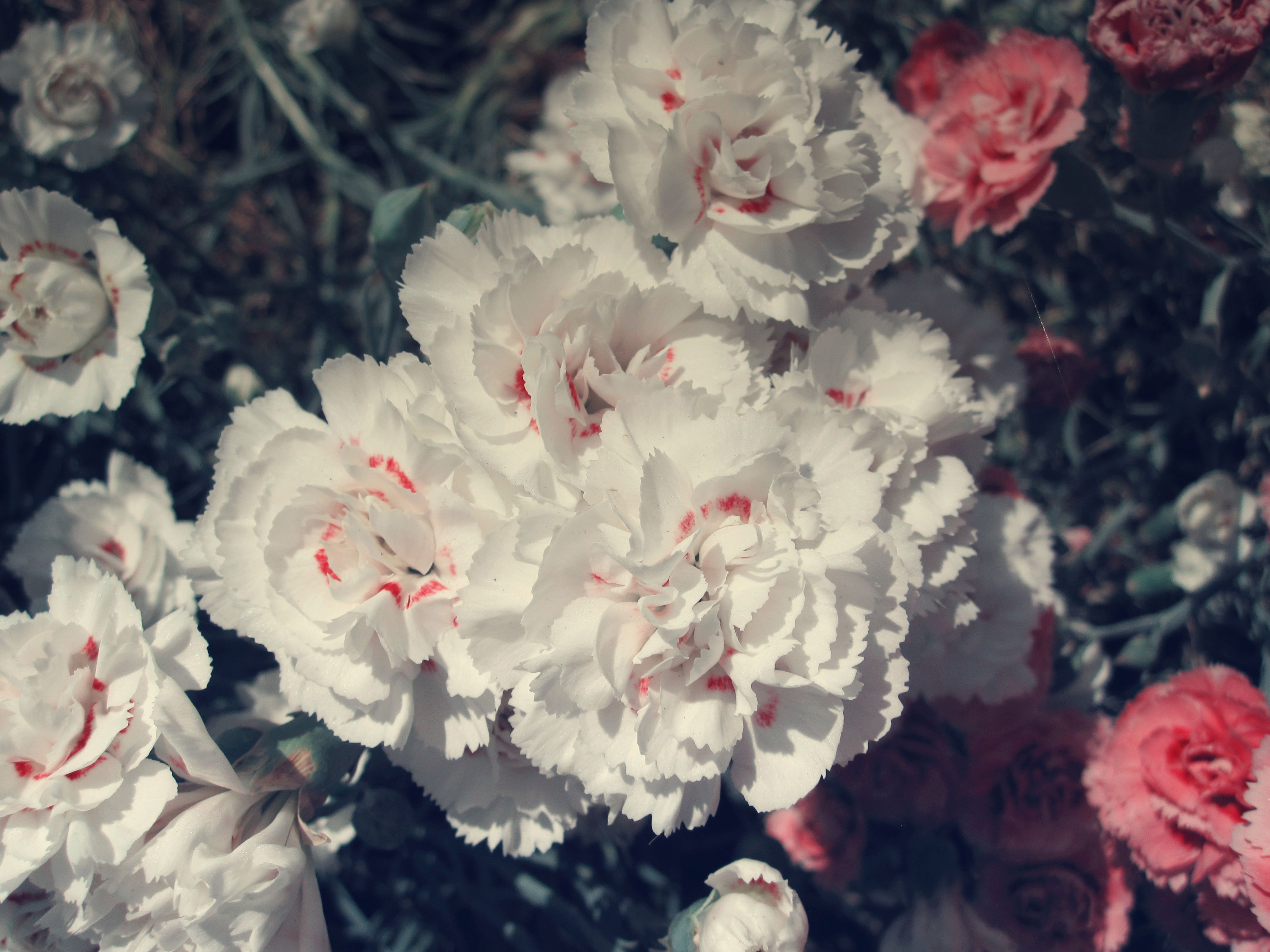 Wallpaper Free Quotes Vintage Flower Pictures May Literary Spring Designs