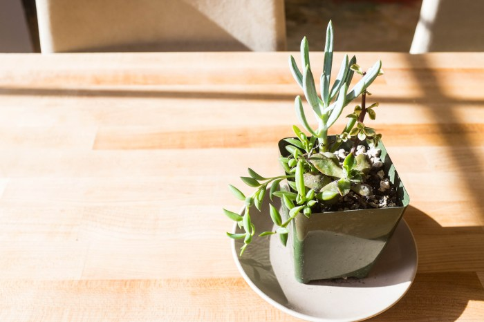 Avoid killing your succulents 4
