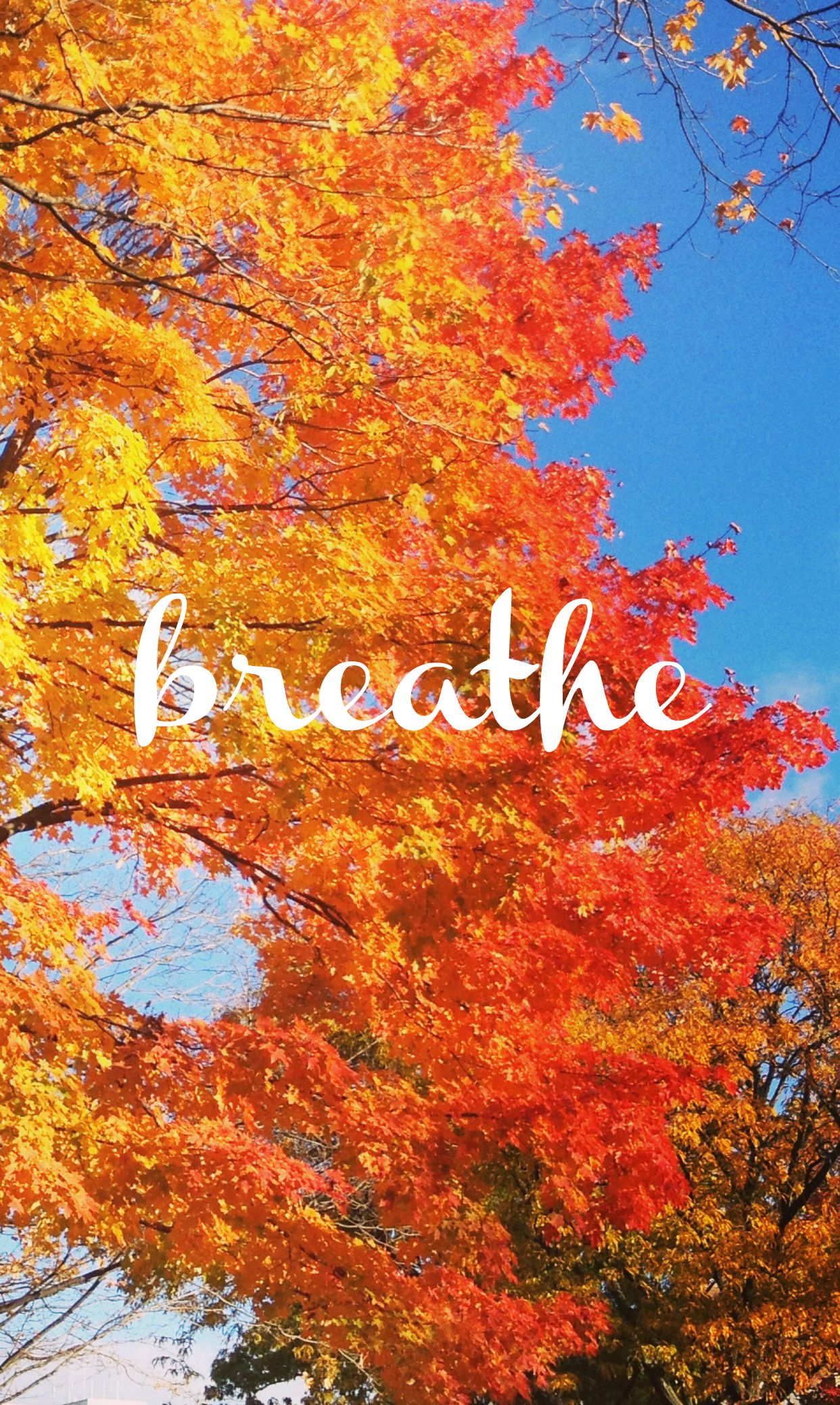 Fall Themed Iphone Wallpapers 8 Ways To Celebrate Autumn No Matter Where You Live