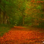 Autumn landscape photography