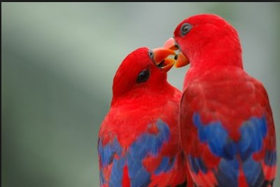 beautiful birds couple in hd wall paper