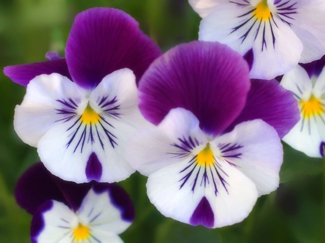 purple flower imafe