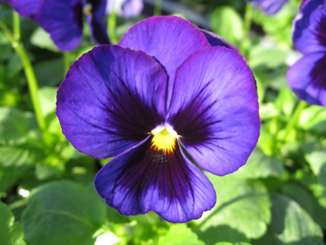 blue flower free download