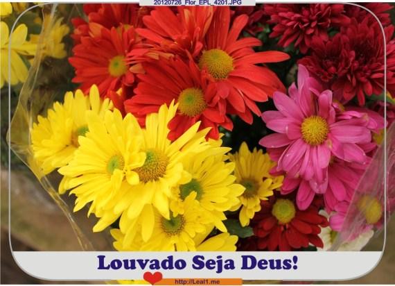 20120726_Flor_EPL_4201