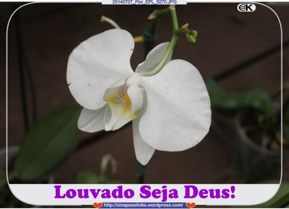 20140707_Flor_EPL_5270