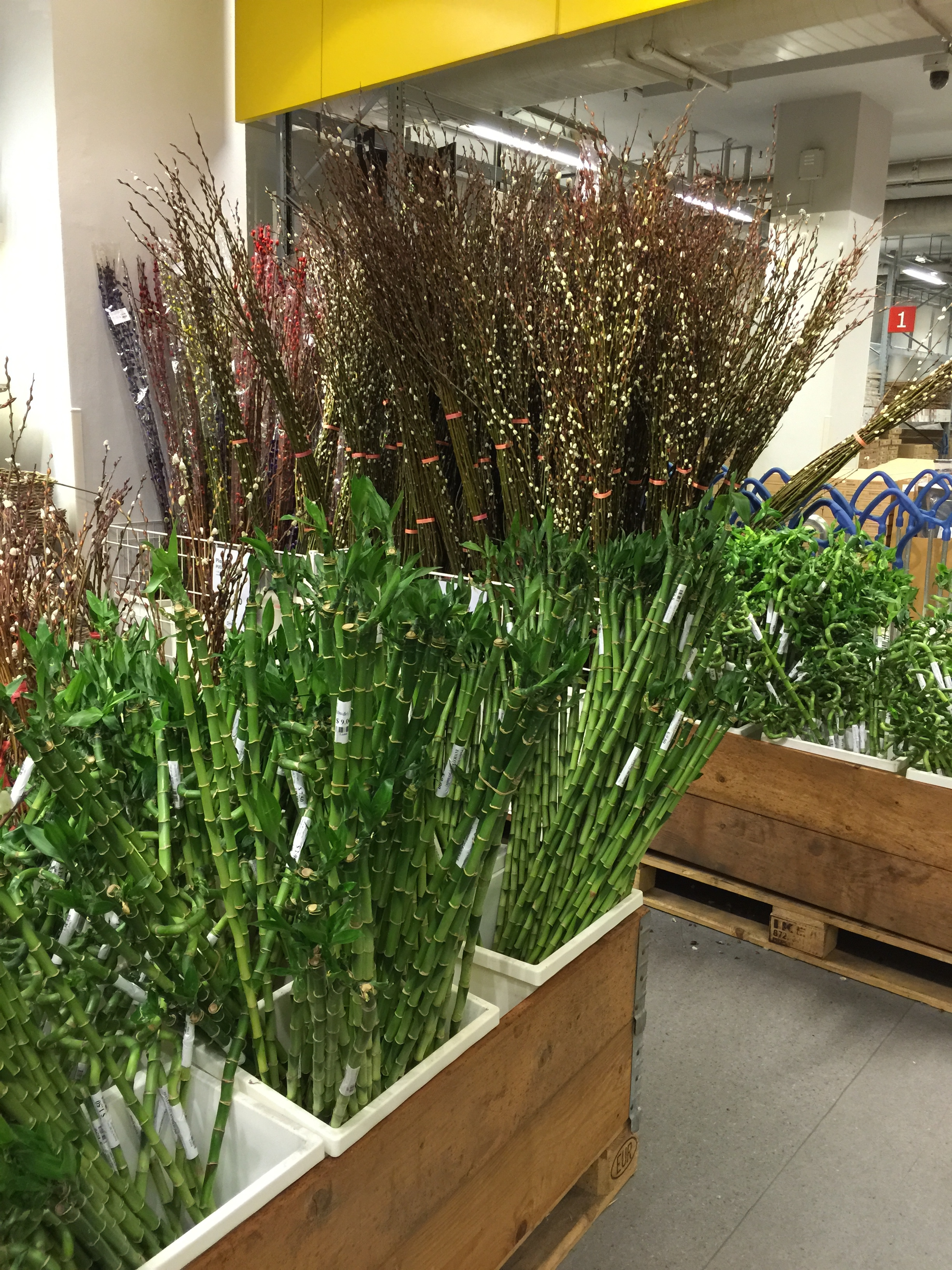 cny2015 lucky bamboo at ikea singapore actually. Black Bedroom Furniture Sets. Home Design Ideas