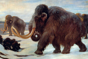 New techniques in cloning frozen mammals may allow scientists to bring back the mammoth. Image Credit: Charles Robert Knight/Wikimedia Commons