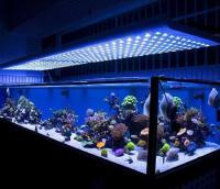 Diy Homemade Fish Tank Lighting - Diy (Do It Your Self)