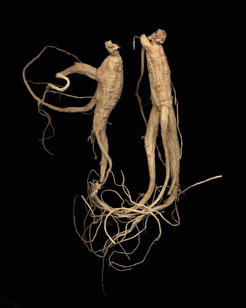 "An example of Evan Lee's work with ginseng roots. ""Ginseng #29."" source: monteclarkgallery.com"