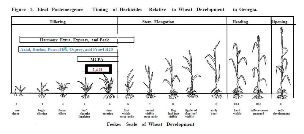 Colquitt County Ag Report Current Wheat Situation \u2014 February 2015