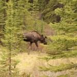 10. Tag – Jasper Nationalpark – Maligne Canyon und Maligne Lake