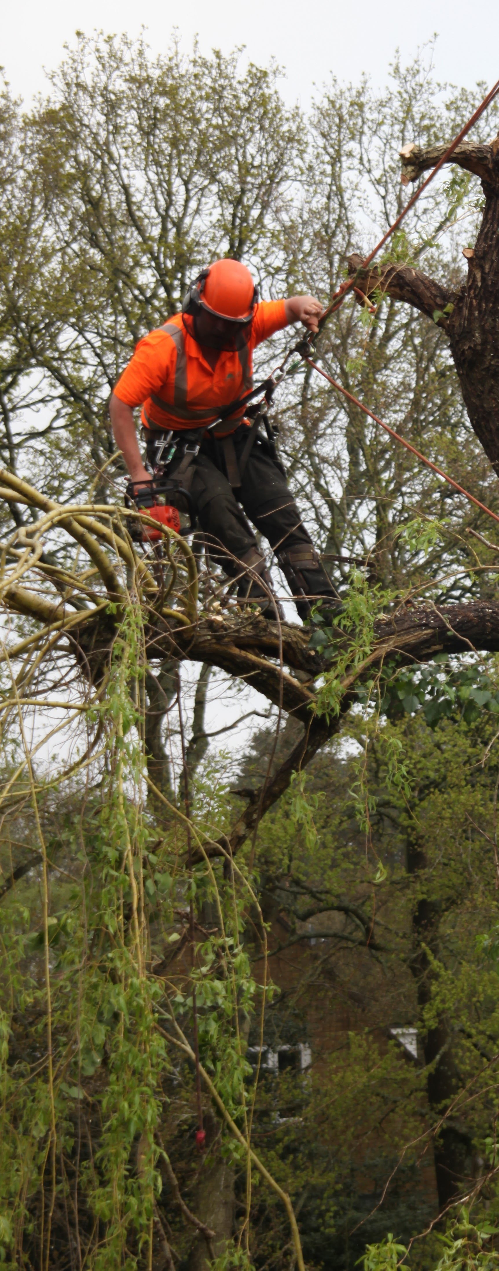 Tree Cutter The Tree Cutter Professional Tree Surgery Baughurst