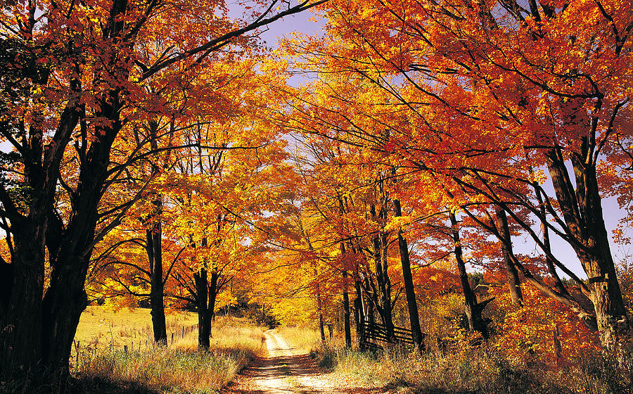 Fall New England Wallpaper Leaves During Fall Season Siowfa14 Science In Our World