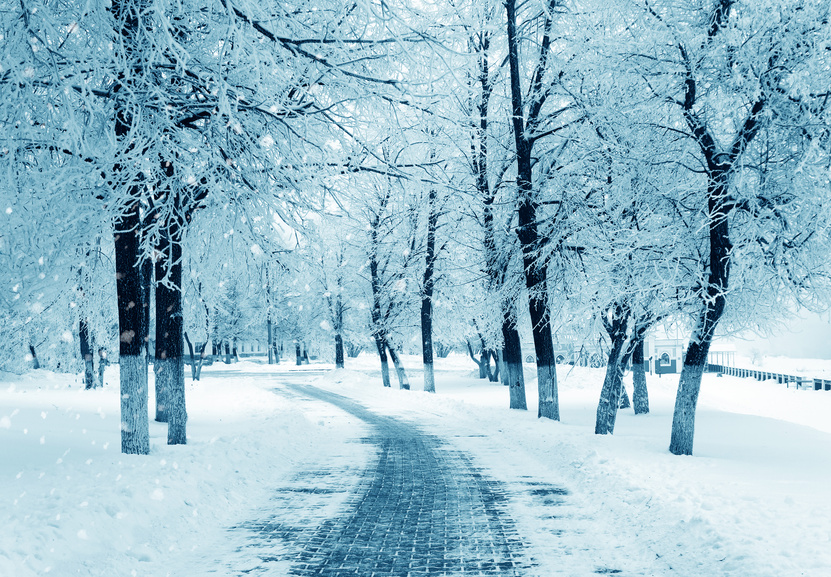 Free Fall Forest Wallpaper Does The Winter Season Cause Depression Siowfa15