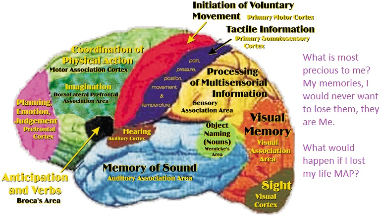 Online Calendar Of 2011 Countdown Timer P8 Brain Map Thea 228 The Cartographic Imagination