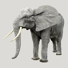 nicholes_elephant