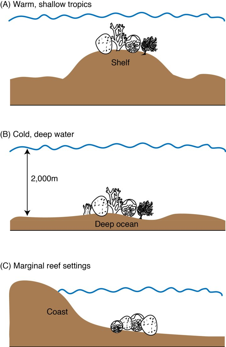 Figure 3: Three habitats where reefs are found. The best-studied reefs are in the warm, shallow tropics (a). Marginal reef settings (b) and (c) exist in environments thought to be unfavorable to reefs, like deeper, cold waters and next to river outlets where large volumes of sediments are washed into the ocean.